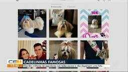 Animais domésticos viram 'celebridades' nas redes sociais