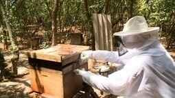 Cresce investimentos no setor de apicultura em Alagoas