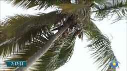 Coqueiros na orla da capital preocupam quem faz caminhada por causa do risco de acidentes