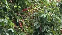 Cooperativa formada por produtores rurais de Piatã ganha selo da agricultura familiar
