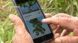 Parte 3: Aplicativo desenvolvido pela Embrapa ajuda produtores rurais