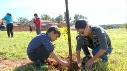 Projeto da TV TEM promove plantio de 200 mudas de árvores em Garça