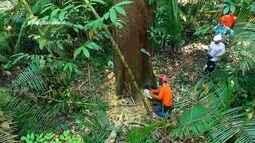 Parte 3: Veja como a exploração de madeira sustentável ajuda preservar floresta