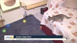Hotel para Cachorro: Hospedagem familiar é a novidade no mercado de pets