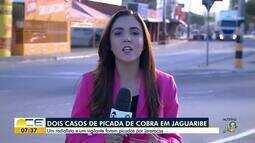 Jararacas atacam duas pessoas em Jaguaribe
