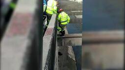 Dois cachorros são resgatados na Linha Amarela após caírem no vão entre pistas