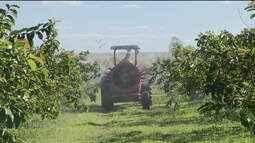 Governo libera uso de mais 51 tipos de agrotóxicos
