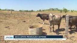 Período de estiagem tem mudado a rotina de quem cria gado em Rondônia