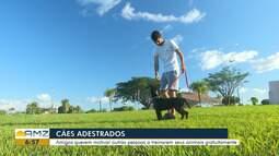 Conheça o trabalho de adestradores de cães em RR