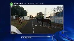 Moradores mandam reclamações de animais soltos nas ruas em cidades da região