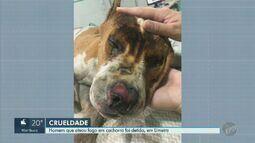 Suspeito de atear fogo em pitbull é ouvido e liberado em Limeira