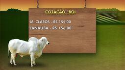 Confira o preço da arroba do boi gordo e dos grãos no Norte de Minas