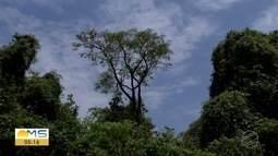 Clareira em meio à vegetação do Parque dos Poderes chama atenção