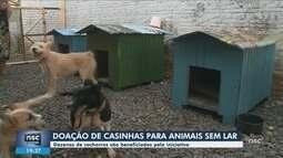 Projeto arrecada doações de casas para animais sem lar no Oeste de SC