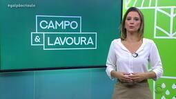 Gisele Loeblein comenta aumento das perdas nas safras estimadas pela Emater