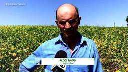 Apesar da estiagem, disparada do dólar é positiva para produtores que exportam soja