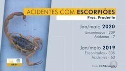 Cai o número de casos de picadas de escorpiões