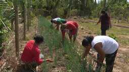 Mirante Rural destaca a força da agricultura familiar em comunidades rurais do Maranhão