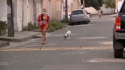 Repórter Mirante mostra trabalho de voluntários dos animais em situação de rua em São Luís