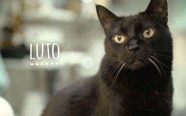 Luto - Bichos! (1ª temporada - Episódio 5)