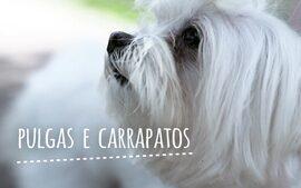 Pulgas e carrapatos - Bichos! (1ª temporada - Episódio 9)
