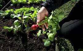 Globo Repórter mostra brasileiros que cultivam a própria comida