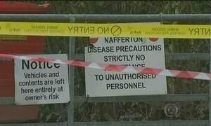 Após confirmação de doença, Inglaterra toma medidas contra gripe aviária