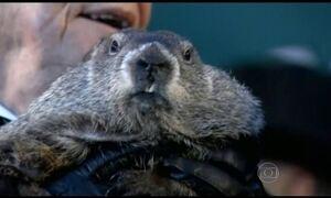Marmota Phil prevê inverno longo nos Estados Unidos