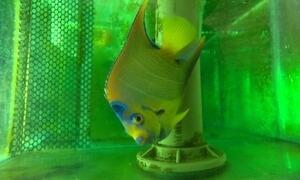Ibama apreende mais de mil animais marinhos em cinco estados e no DF