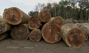 Operação desmantela esquema de exploração ilegal de madeira no Pará