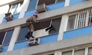 Vídeo mostra resgate de gato em fachada de prédio no Rio de Janeiro