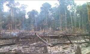 Amazonas tem o maior número de queimadas em 17 anos