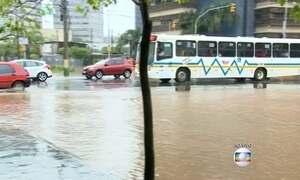 Gaúchos se mobilizam para ajudar animais desabrigados nas enchentes