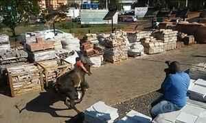 Bois em fuga assustam moradores no interior de São Paulo; assista