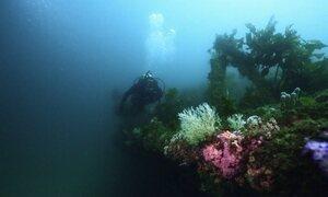 Expedição Oriente faz mergulho fascinante em navio naufragado