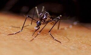 Técnica de radiação nuclear pode diminuir a população do mosquito que transmite a zika