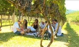 Colheita da uva no RS é opção de passeio durante feriado de carnaval