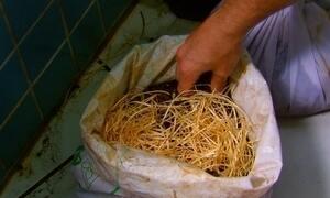 Saiba como fazer compostagem
