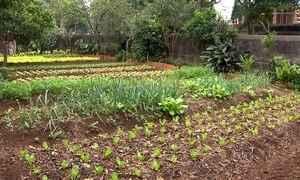 Moradores transformam terrenos baldios em hortas orgânicas em SP