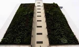Jardins verticais mudam paisagem cinzenta do centro de São Paulo
