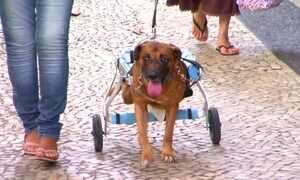 Cadeira de rodas para animais