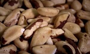 Castanha do Pará traz benefícios para a saúde da tireoide, diz médico de SP