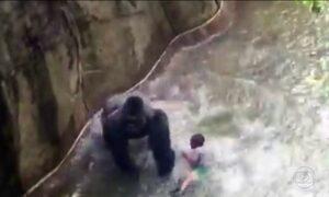 Especialista analisa imagens da criança que caiu na jaula de gorila
