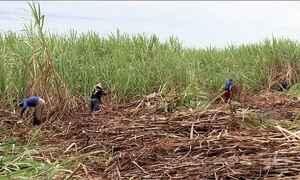 Justiça proíbe queimadas na colheita da cana-de-açúcar no interior de SP