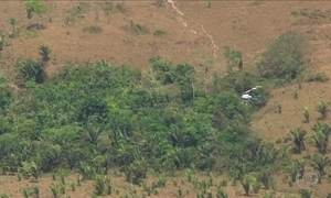 Desmatamento na Amazônia dobra em junho, diz Imazon