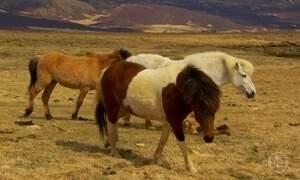 Islandeses tiveram que aprender a comer de tudo, inclusive cavalo