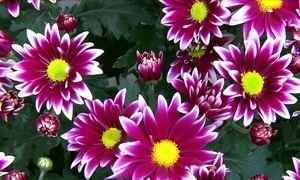 Setor de flores escapa da crise e cresce 6% ao ano