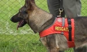 Cães ajudam na busca de vítimas em acidentes