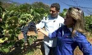 Casal abandona cidade grande para plantar uvas na Serra dos Pirineus