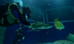 Mergulhe com filhotes de tubarão no maior aquário da América do Sul